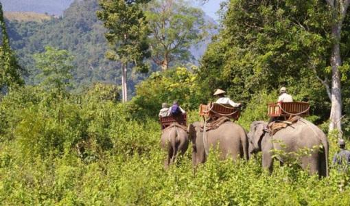 elefante-en-laos